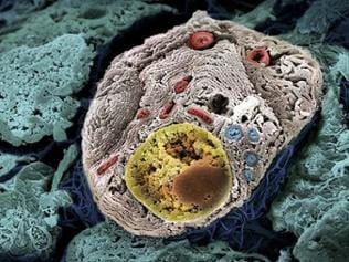 Mikroskopischer Blick in eine menschliche Zelle