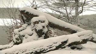 Baumstämme und -stumpf unter Schneedecke