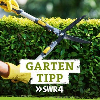 Podcast SWR4 Gartentipp (Foto: Getty Images, SWR, Fotograf: jacoblund)
