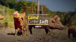 Logo Land Liebe Luft (Foto: SWR)