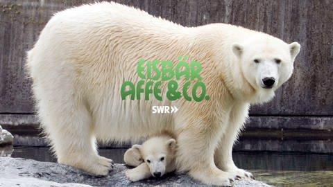 Logo Eisbär, Affe & Co. (Foto: SWR)