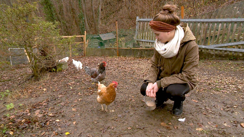 Eine junge Frau schaut auf zwei Hennen. (Foto: SWR)