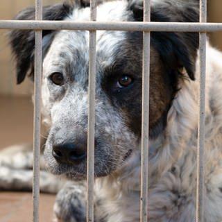 Ein Hund sitzt in seinem Käfig. (Foto: SWR)