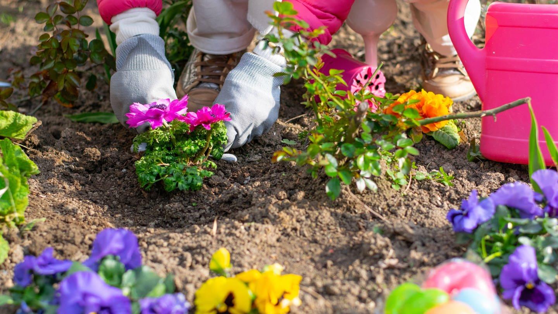 Mit Blumen gegen die Tristesse (Foto: SWR)