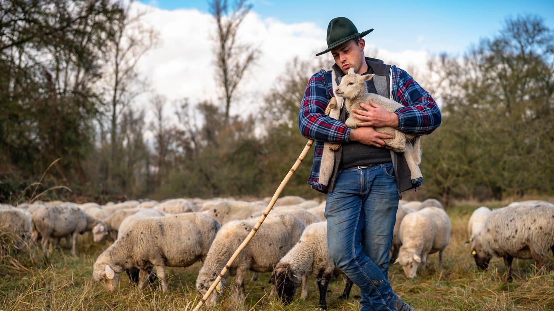 Schäfer hält ein Lamm in seinem Arm. (Foto: SWR)