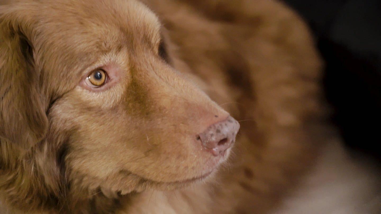 Mischlingshund Tomte wurde über Nacht zum Internetstar
