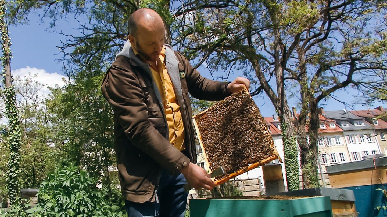 Berufsimker Tobias Miltenberger an einem seiner Bienenkästen in Stuttgart