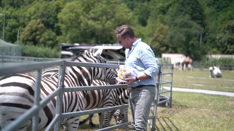 Mann füttert Zebras (Foto: SWR)