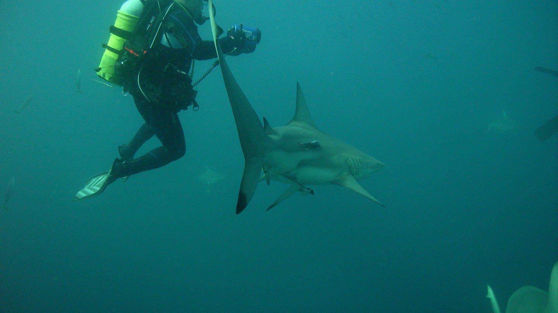Mit Haien tauchen und sie verstehen: Andreas ist von den Jägern der Meere fasziniert