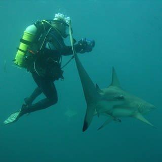 Mit Haien tauchen und sie verstehen: Andreas ist von den Jägern der Meere fasziniert  (Foto: Timo Weber)