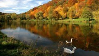 See im Herbst  (Foto: picture-alliance / Reportdienste, imageBROKER Anna Reinert)