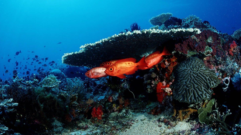 Fische unter Wasser (Foto: picture-alliance / Reportdienste, Reinhard Dirscherl)