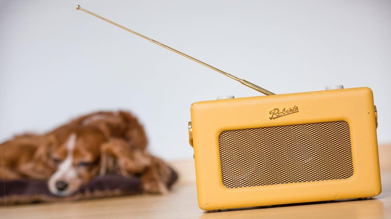 Hund hört Radio (Foto: dpa Bildfunk, Picture Alliance)