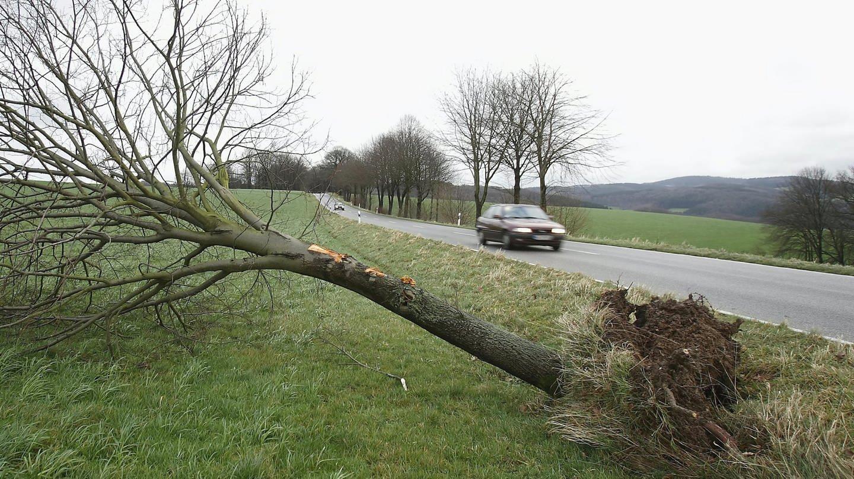 Auto vor umgestürztem Baum (Foto: dpa Bildfunk, Anton Luhr)
