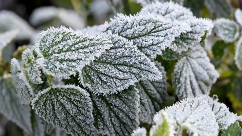 Nachtfrost im Mai ist nicht ungewöhnlich (Foto: dpa Bildfunk, Picture Alliance)