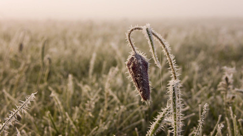 Manche Pflanzen blühen in milden Wintern zu früh und fallen dann dem Frost zum Opfer.