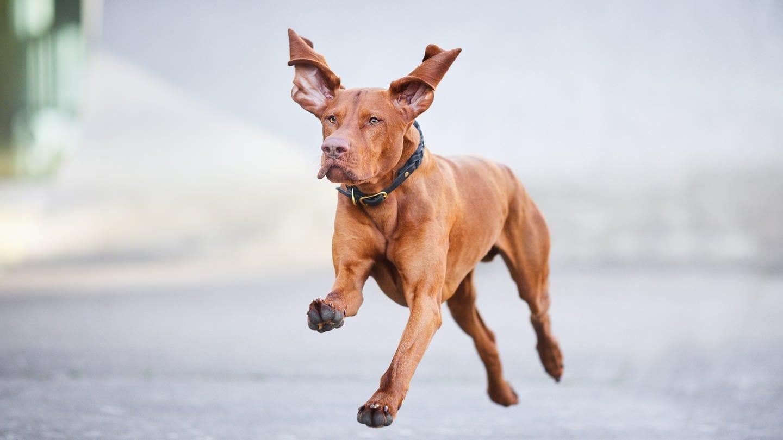 Hundefotografie von Raphaela Schiller (Foto: Pressestelle, (c) Raphaela Schiller)