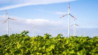 Der Klimawandel treibt die Energiewende voran (Foto: dpa Bildfunk, Picture Alliance)