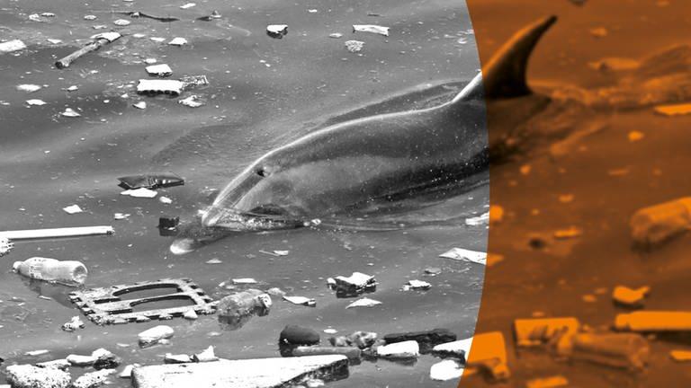 Delphin  schwimmt zwischen angeschwämmten Müll