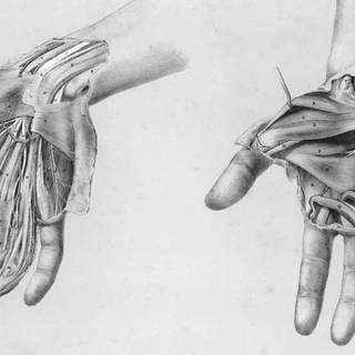 Superficial and deep views of the palm of the hand  (Foto: picture-alliance / Reportdienste, picture alliance/Mary Evans Picture Library)