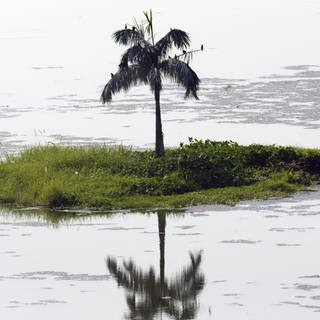 A solitary palm tree on a tiny island Lake Inya in Yangon in Myanmar. (Foto: Imago, IMAGO / Loop Images/JonxBower)