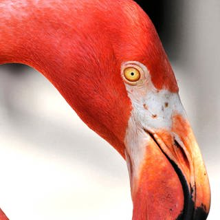 Flamingo (Foto: Imago, Zuma-Wire / Joe Burbank)