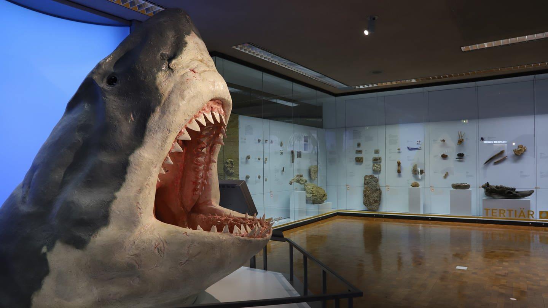 Tertiär-Ausstellung (Foto: Pressestelle, Staatliches Museum für Naturkunde Stuttgart, Michael Rasser)