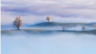 """Fotografie von Nick Schmid, """"Trees of Calm"""", Kanton Zürich, Schweiz (Foto: Pressestelle, Quelle: nickschmid.com)"""