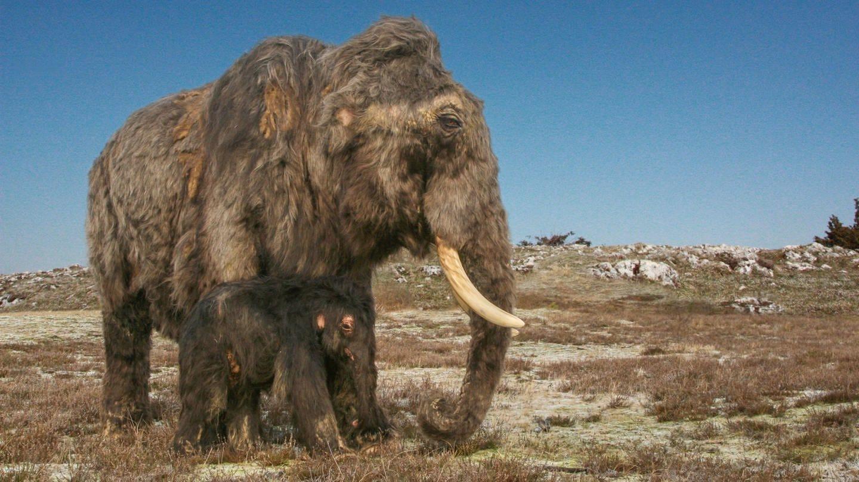 "Ausstellung ""Eiszeit-Safari"" in den Reiss-Engelhorn-Museen"
