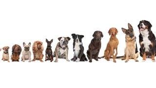 Verschiedene Hunderasse Symbolfoto (Foto: Imago, Shotshop)