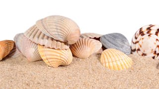 Seashells in beach sand on a white background (Foto: Imago,  agefotostock)