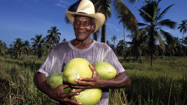 Frisch gepflückte Kokosnüsse einer Kokosplantage bei Salado (Foto: Imago, imago images / Jochen Tack)