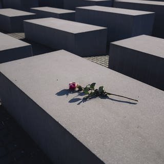 Rote Rose auf dem Holocaust-Mahnmal in Berlin (Foto: picture-alliance / Reportdienste, Jan Scheunert / ZUMA Wire)
