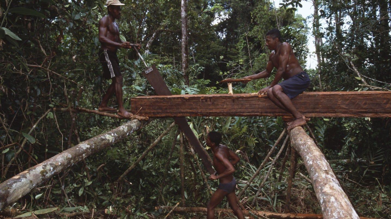 Regenwald Masoala Madagaskar (Foto: picture-alliance / Reportdienste, Photoshot/NICK GARBUTT)
