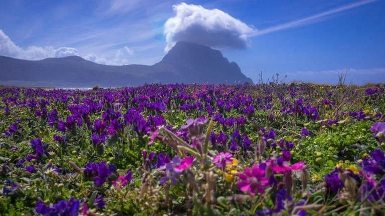 Blumenwiese an sizilianischer Küste (Foto: SWR, (privat) - Werner Cee)