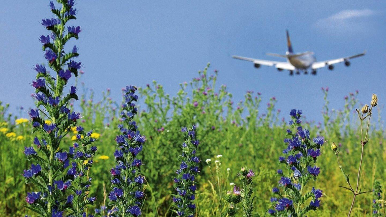Die schlechte Öko-Bilanz des Flugverkehrs weckt bei vielen Menschen Flugscham. Forscher arbeiten an umweltfreundlicherem Kerosin, leichteren Flugzeugen und klimaverträglicheren Flugrouten. (Foto: Imago, imago/photothek)