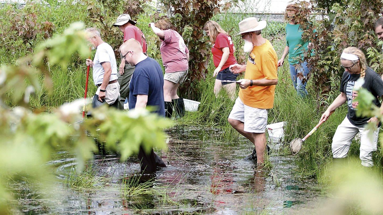 Citizen Science-Projekte gibt es weltweit und Millionen Menschen machen mit: Lehrer sammeln in einem Teich in Maryville, Tennessee /USA Tiere und Vegetation für wissenschaftliche Forschung im Rahmen eines Citizen Science-Kurses