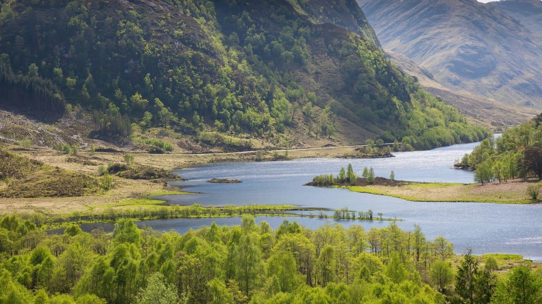 Wald in den schottischen Highlands (Foto: Imago, imago images / blickwinkel)
