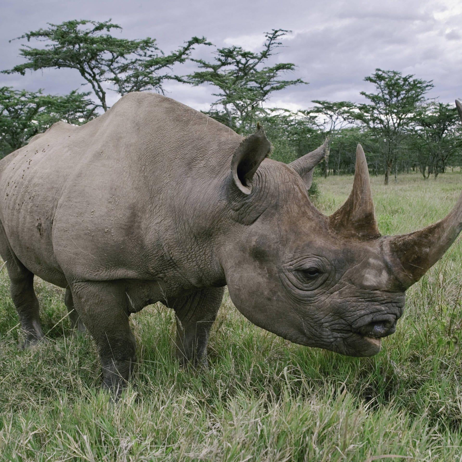 Artenschutz durch Gentechnik? Wissenschaftler manipulieren die Natur