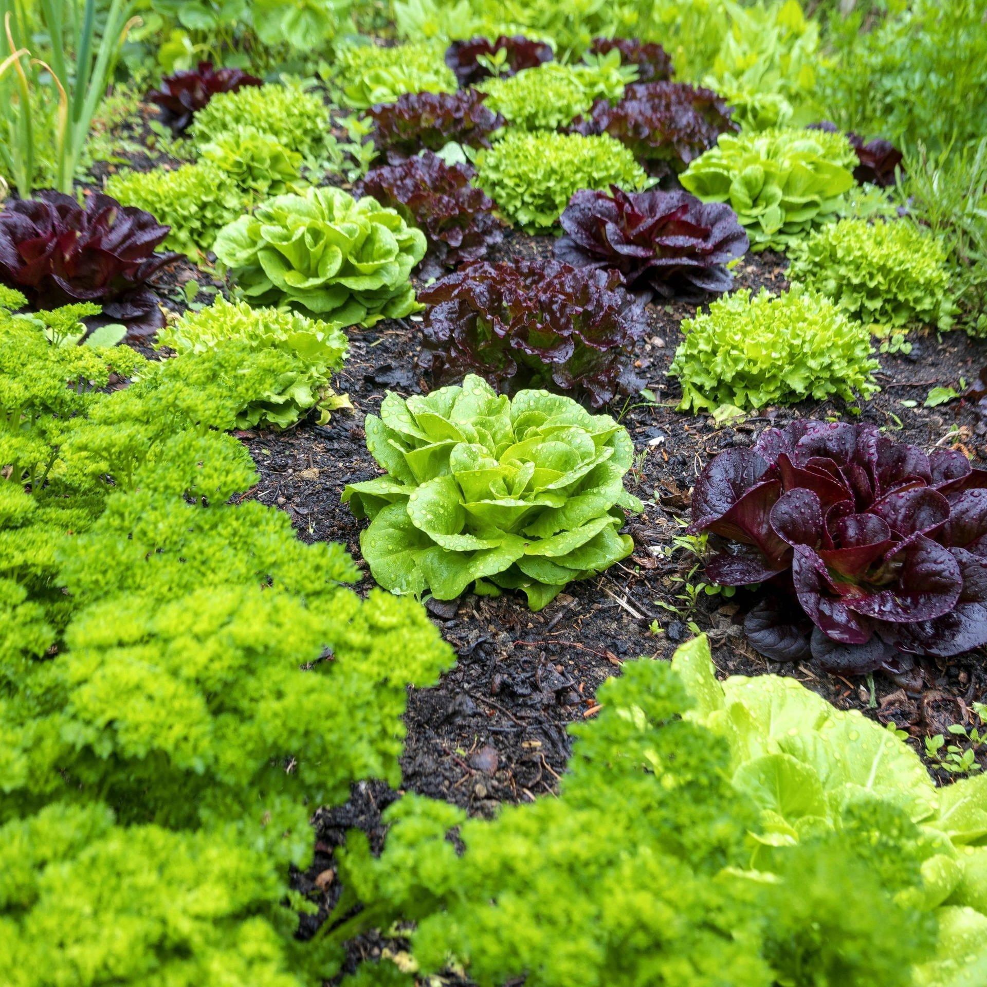 Permakultur – Eine alternative Landwirtschaft