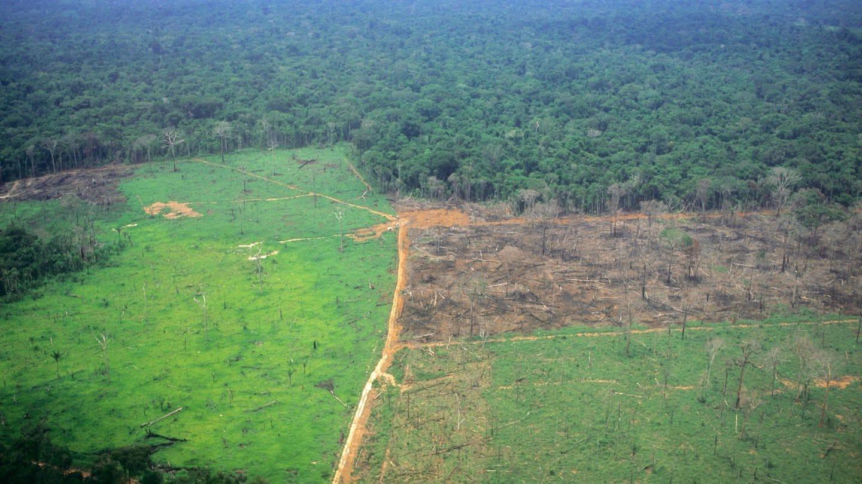 Der Amazonas-Regenwald wird in Brasilien mehr und mehr zerstört: Ein Teil der Fläche ist bereits in Gründland umgewandelt, ein weiterer Teil durch Brandrohdung zerstört; im Hintergrund der eigentliche Regenwald