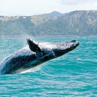 Schwergewicht der Meere – Der Wal (Foto: Colourbox, Foto: Colourbox.de - Royalty free)