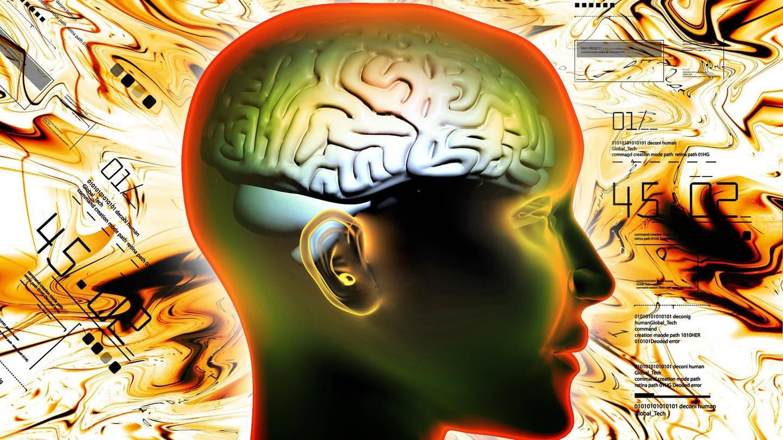 Gehirn einer Frau (grafische Darstellung): Offenbar beeinflussen Hunderte von Genen unsere kognitiven Fähigkeiten. Die Gehirne intelligenter Menschen verfügen über besonders effizient organisierte Nervenverbindungen. (Foto: Imago, imago images / Panthermedia)