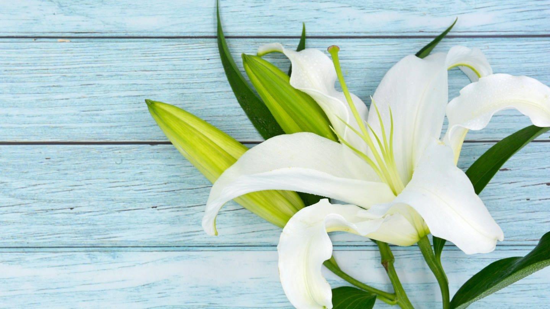 imago images / Imaginechina-Tuchong (Foto: Imago, Weiße Lilien: Wie verändert die Konfrontation mit dem eigenen Tod das Leben?)