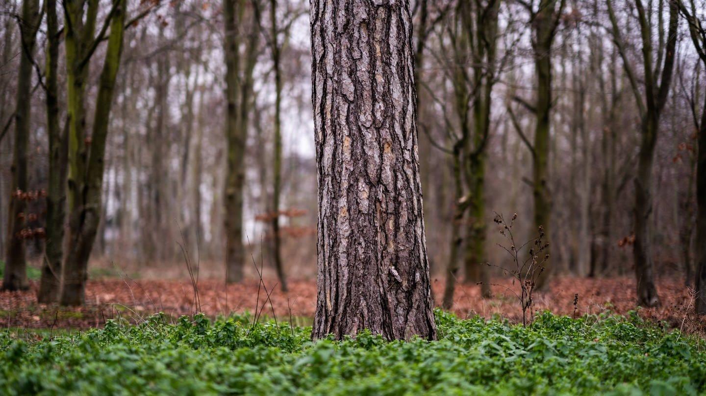 Bäume im Bois de Boulogne westlich von Paris / Frankreich (Foto: Imago, IMAGO / Hans Lucas)