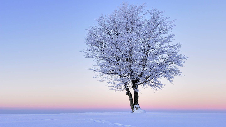 Verschneiter Baum im Morgenrot (Foto: Imago, IMAGO / imagebroker)