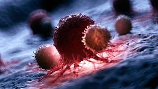 Illustration von weißen Blutkörperchen, die eine Krebszelle angreifen (Foto: imago images, IMAGO / Science Photo Library)