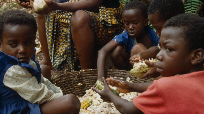 Noch immer gibt es Kinderarbeit bei der Kakaoernte in Westafrika. Das Lieferkettengesetz soll das verhindern, indem bei der Zulieferung an Unternehmen in Deutschland und ganz Europa auf faire Arbeitsbedingungen geachtet wird.