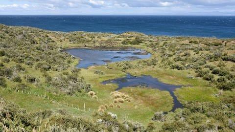 La costa del Estrecho de Magallanes entre Porvenir y Ponta Arenas, Patagonia Chile (Foto: IMAGO, IMAGO / imagebroker)