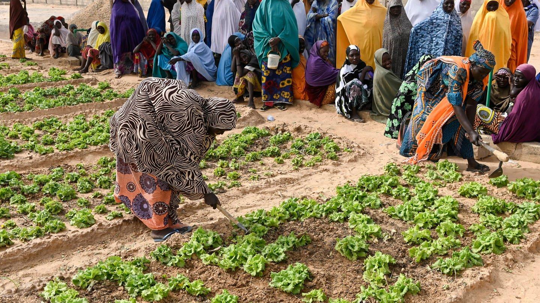 Frauen hacken und jäten Unkraut auf einem Feld: Ein Projekt in Maradi / Niger zur Armutsbekämpfung und Anpassung an den Klimawandel: Gemüsegarten mit Bewässerung durch Solar-Panel für Wasserpumpe,